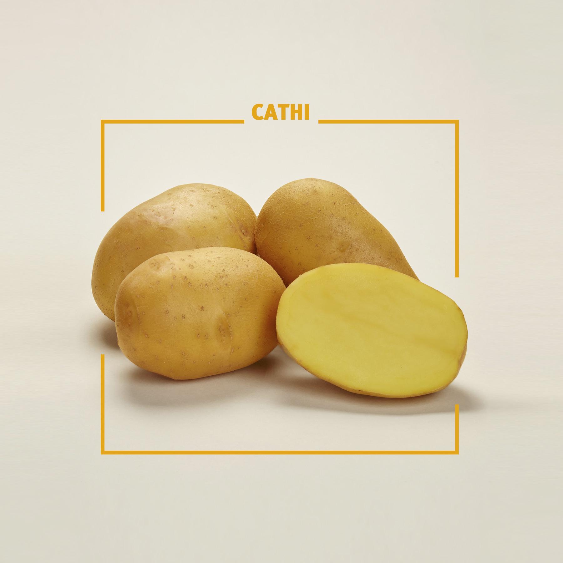 Bavaria Saat, Kartoffelzucht, Cathi