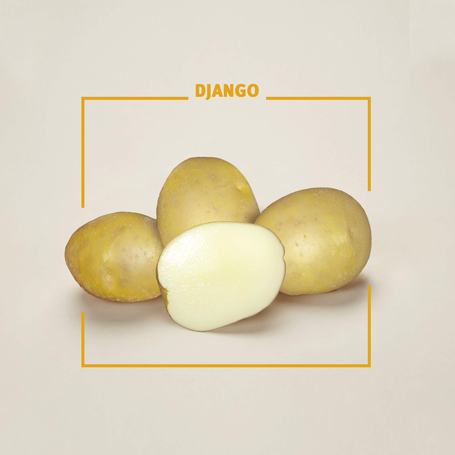 Bavaria Saat, Kartoffelsorte Django