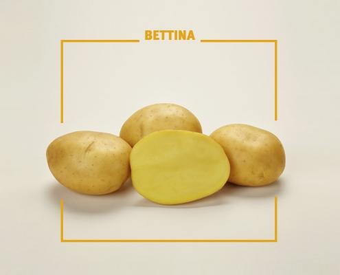 Bavaria Saat, Kartoffelzucht, Bettina